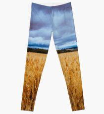 Wheat Field Leggings