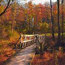 Bridge to Fall by David Lamb