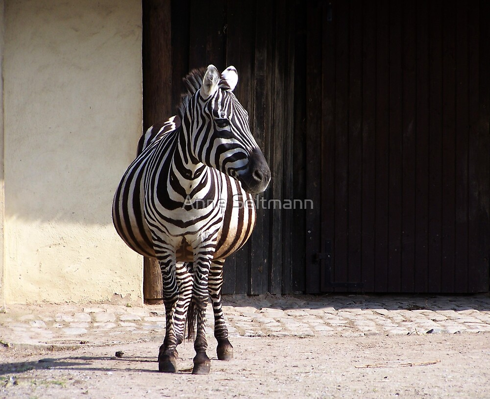 Longitudinally striped makes slim  ;-) by Anne Seltmann