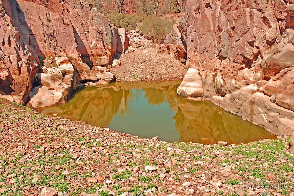 Water-Hole by Mark Whittle