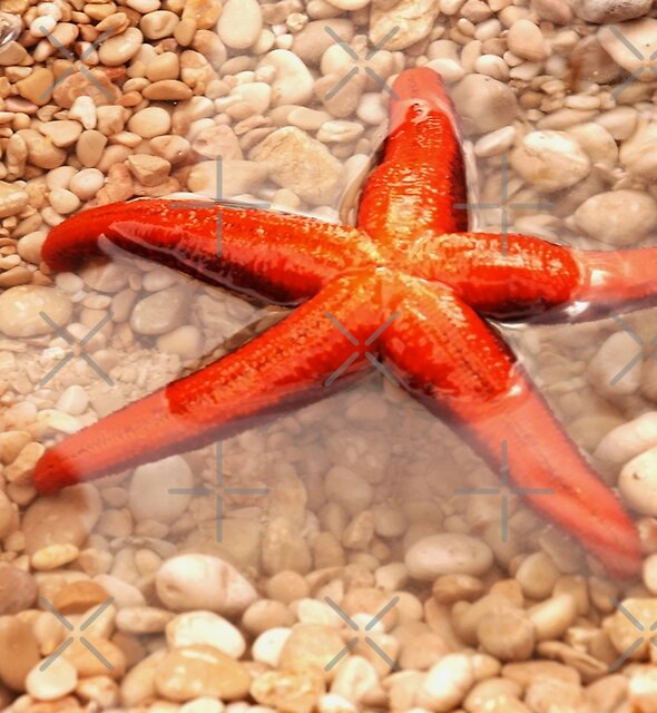 Sea star by AleFairyland