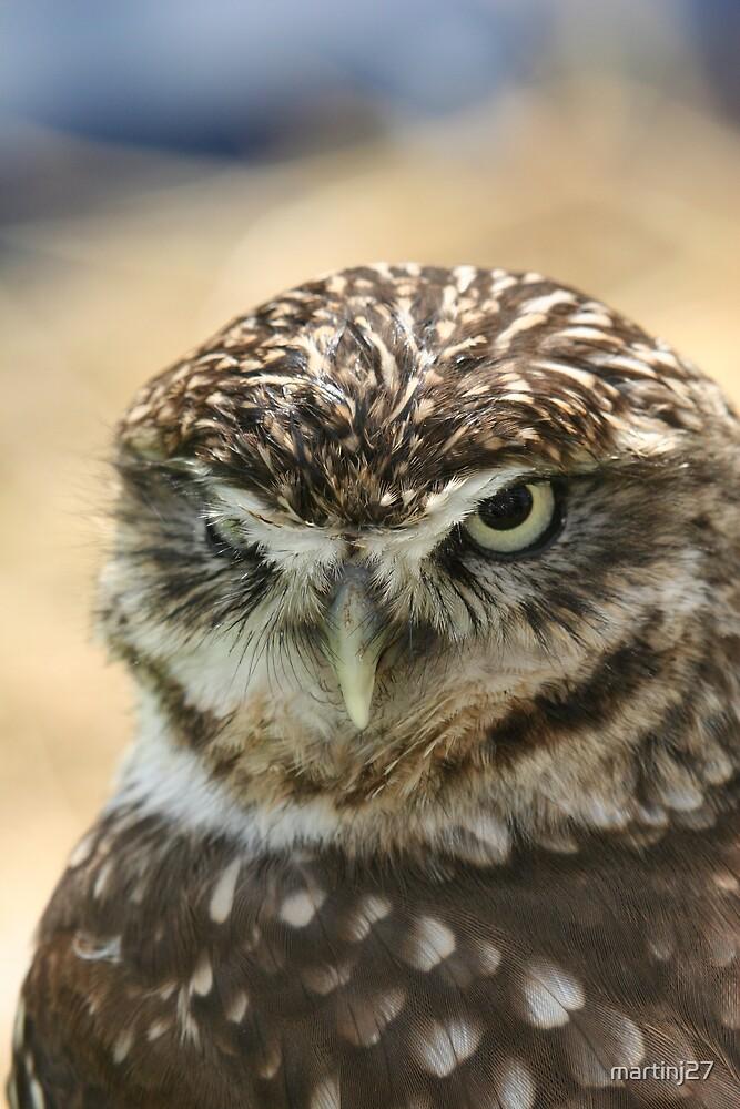 tiny owl  by martinj27