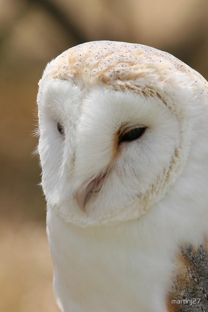 barn owl  by martinj27