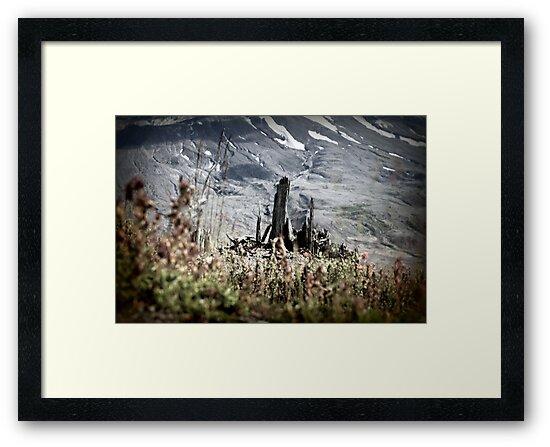 Shards of a tree, Johnston's Ridge by Dawna Morton