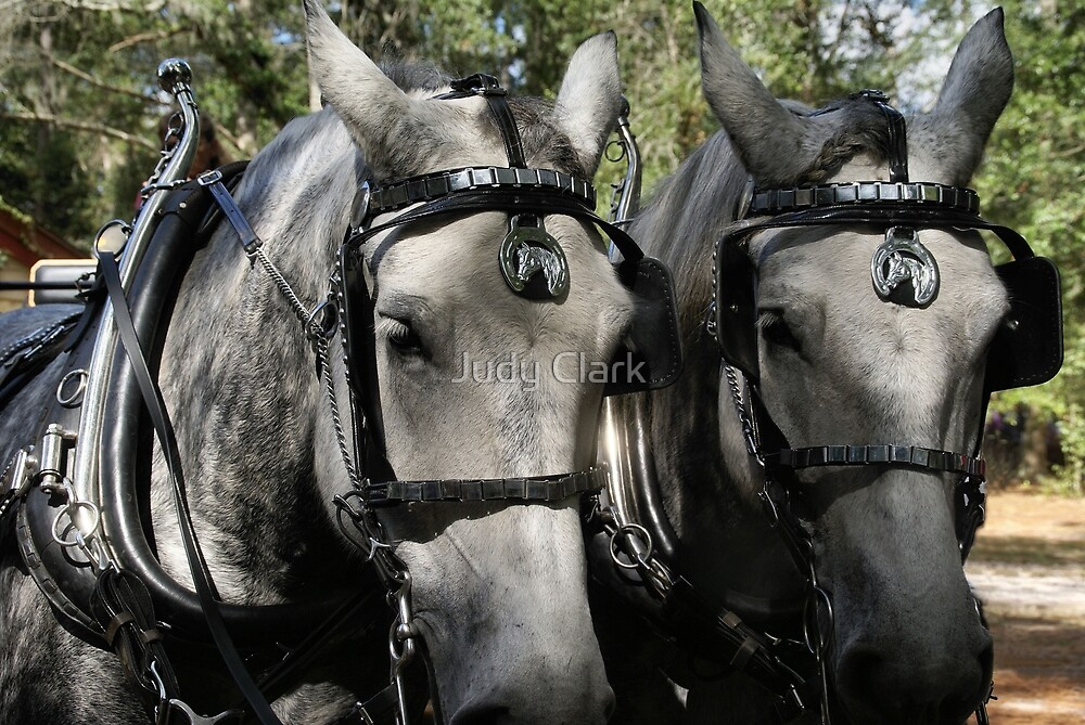 Silver Beauties by Judy Clark