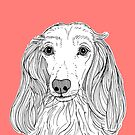 Long Haired Dachshund Portrait by Adam Regester