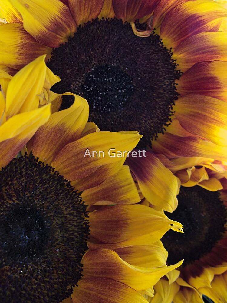 Sunflowers by Ann Garrett