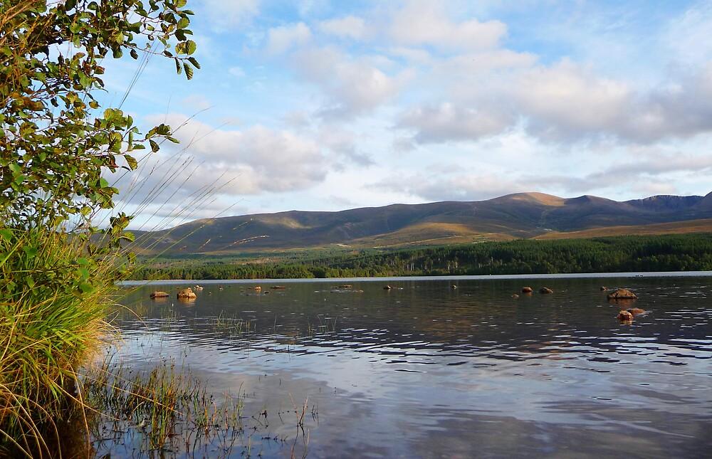 Cairngorm National Park by Braedene