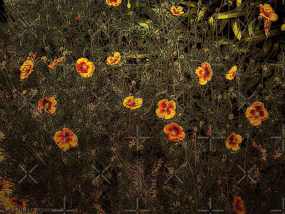 Poppy Field by © Helen Chierego
