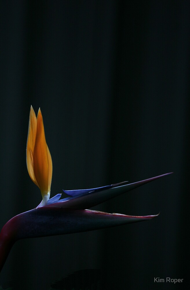 Natures Flame by Kim Roper
