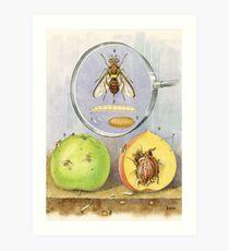 Queensland Fruit Fly Art Print