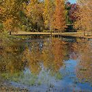Colorful Autumn Pond Reflections by Bo Insogna