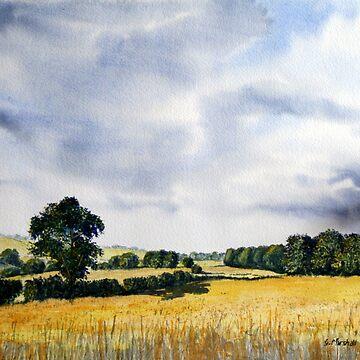 Fields of Gold by GlennMarshall
