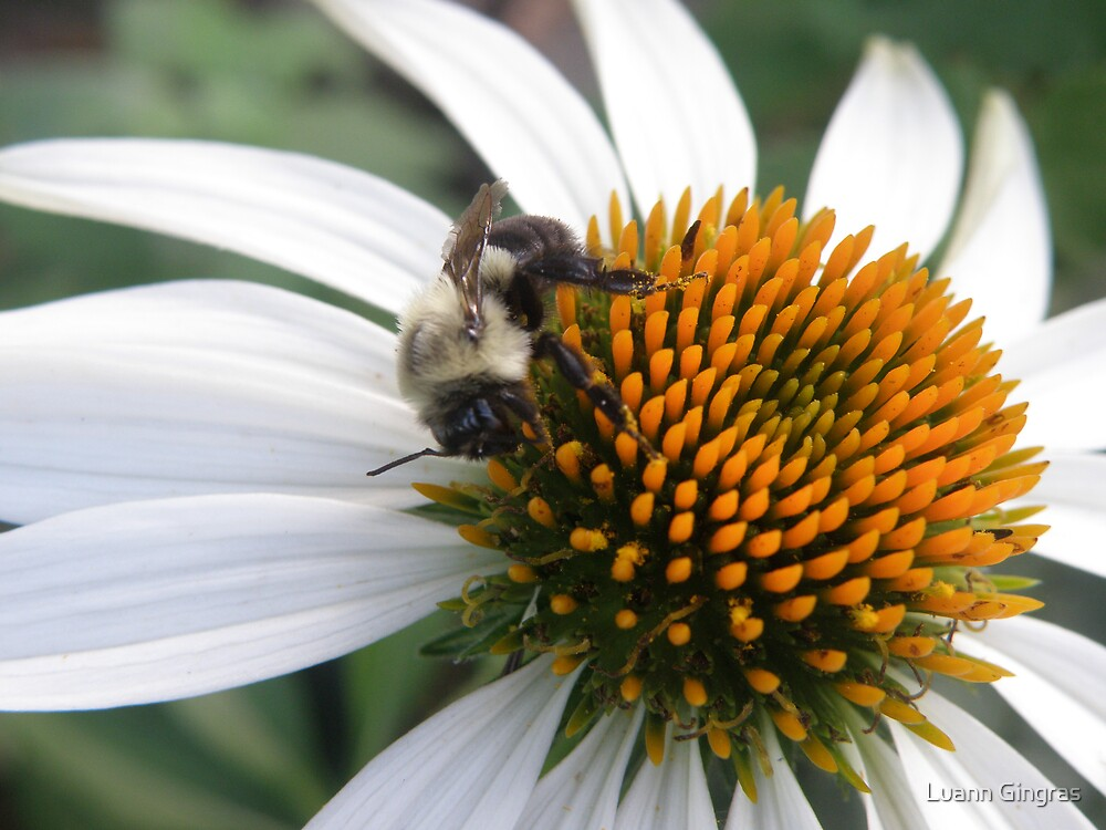 Busy Bee by Luann Gingras
