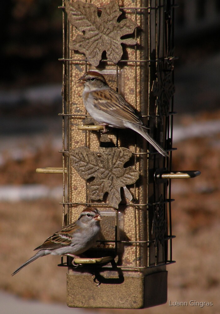 Sparrows by Luann Gingras