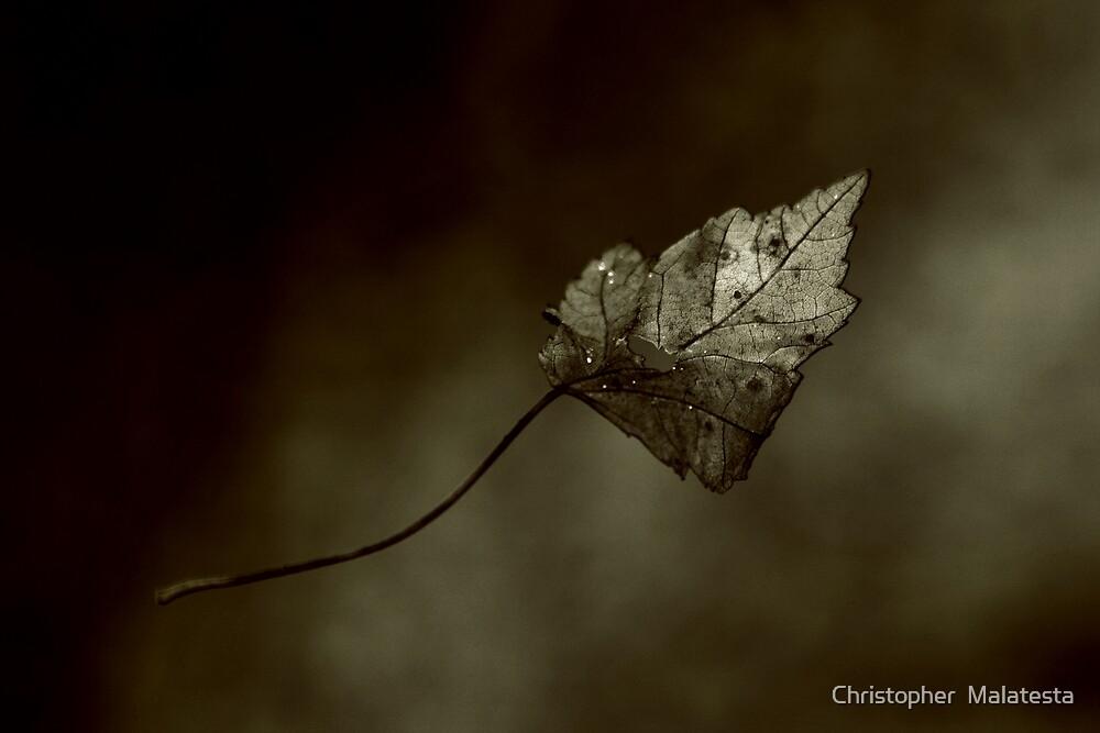 Falling by Christopher  Malatesta