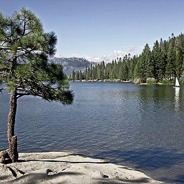 Tree Growing on a Rock  - Hume Lake  - Yosemite National Park by Buckwhite