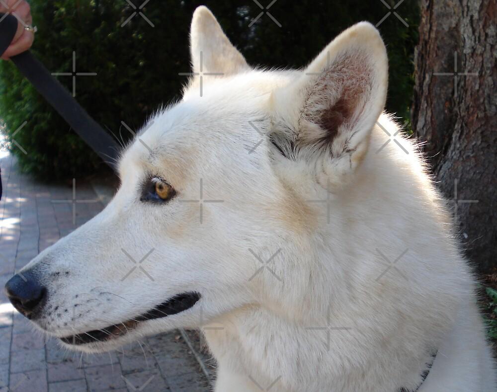 Miko - White Wolf by JRobinWhitley