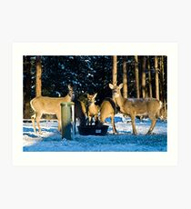 Deer at the Well Art Print