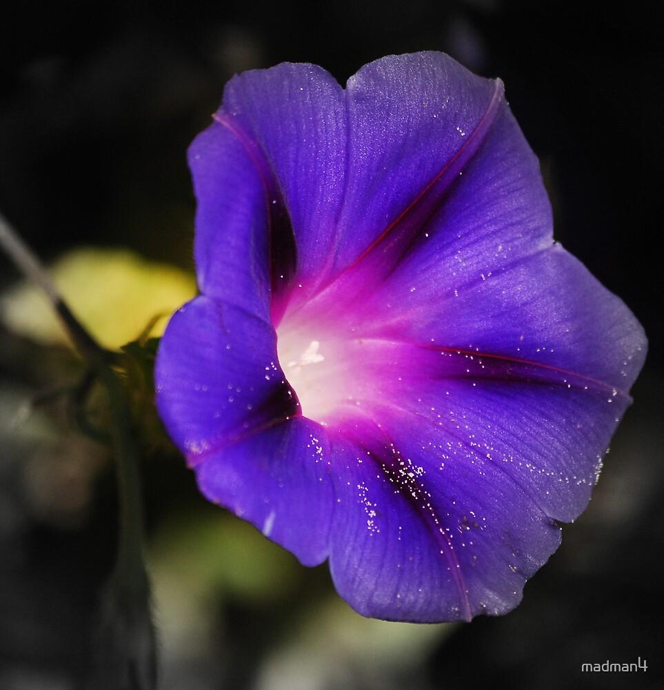 Deep Purple by madman4
