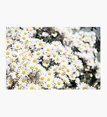 Gänseblümchen für Tage Fotodruck