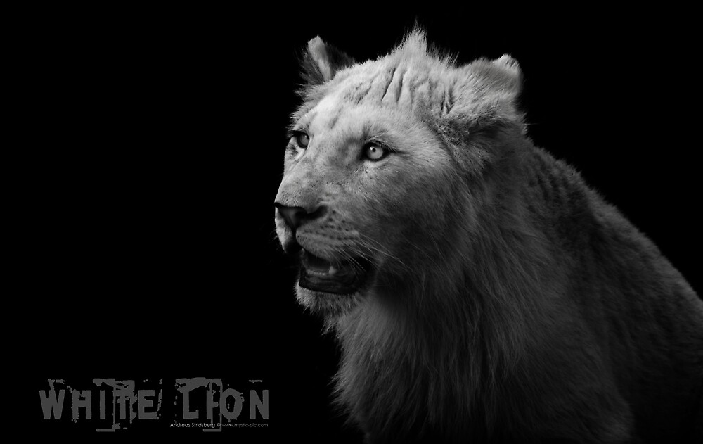 White Lion by Andreas Stridsberg