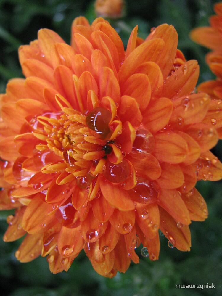 Orange Flower by mwawrzyniak