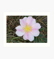 Wild prarie rose Art Print