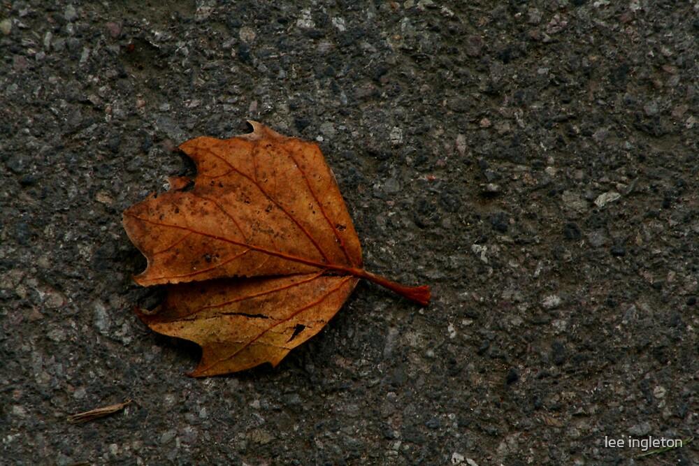 leaf on hardground by lee ingleton