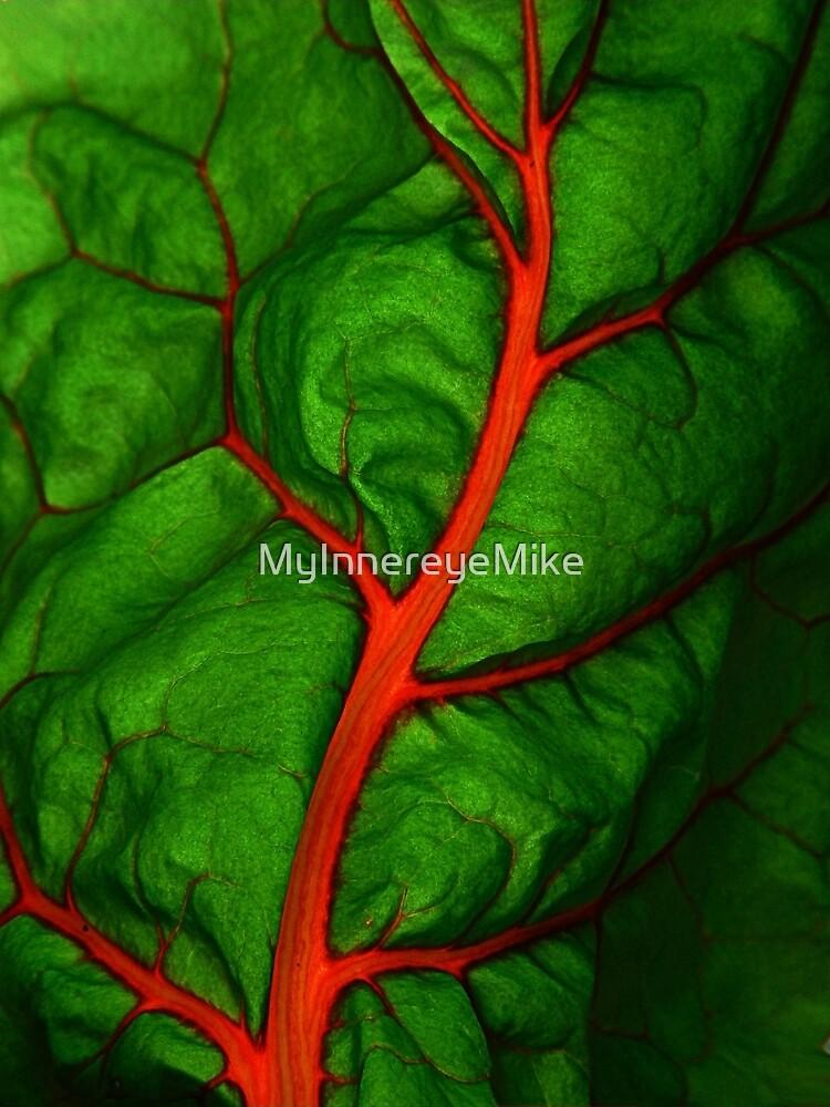 #11        Swiss Chard Leaf by MyInnereyeMike