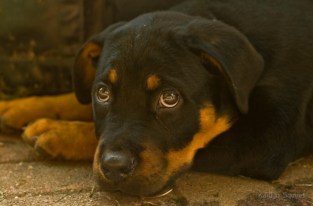 Puppy eyes by Kaitlyn  Squires