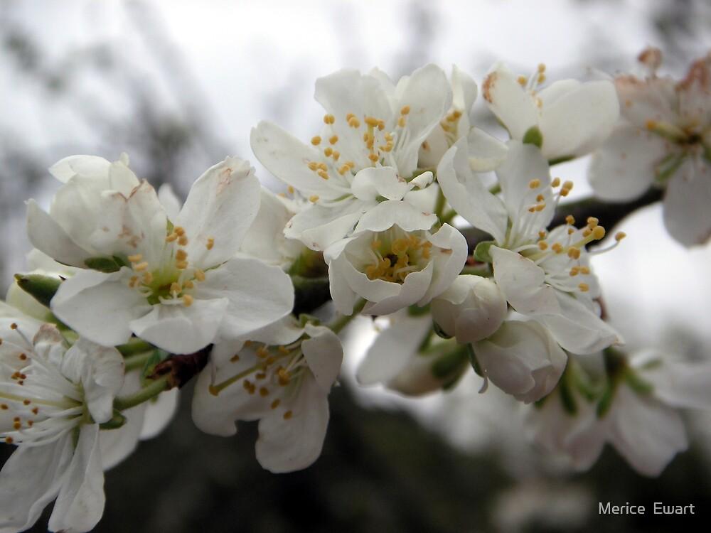 When Spring Is InThe Air! by Merice  Ewart-Marshall LFA
