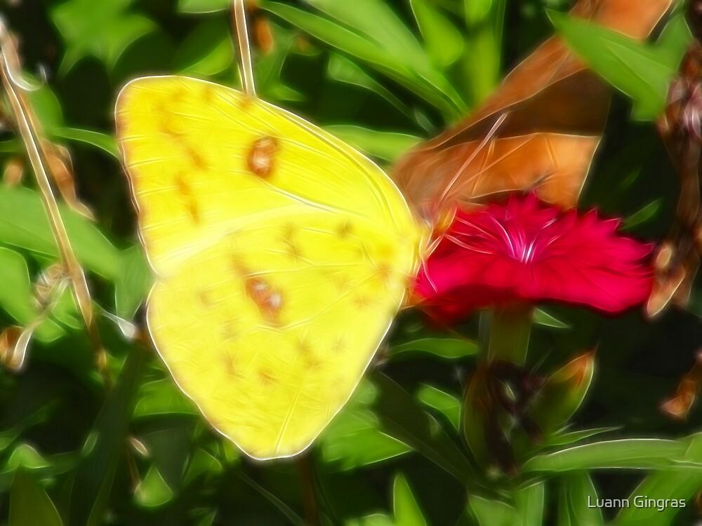 Little Yellow by Luann Gingras