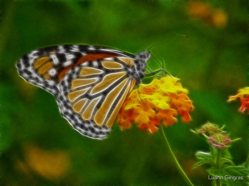Monarch by Luann Gingras