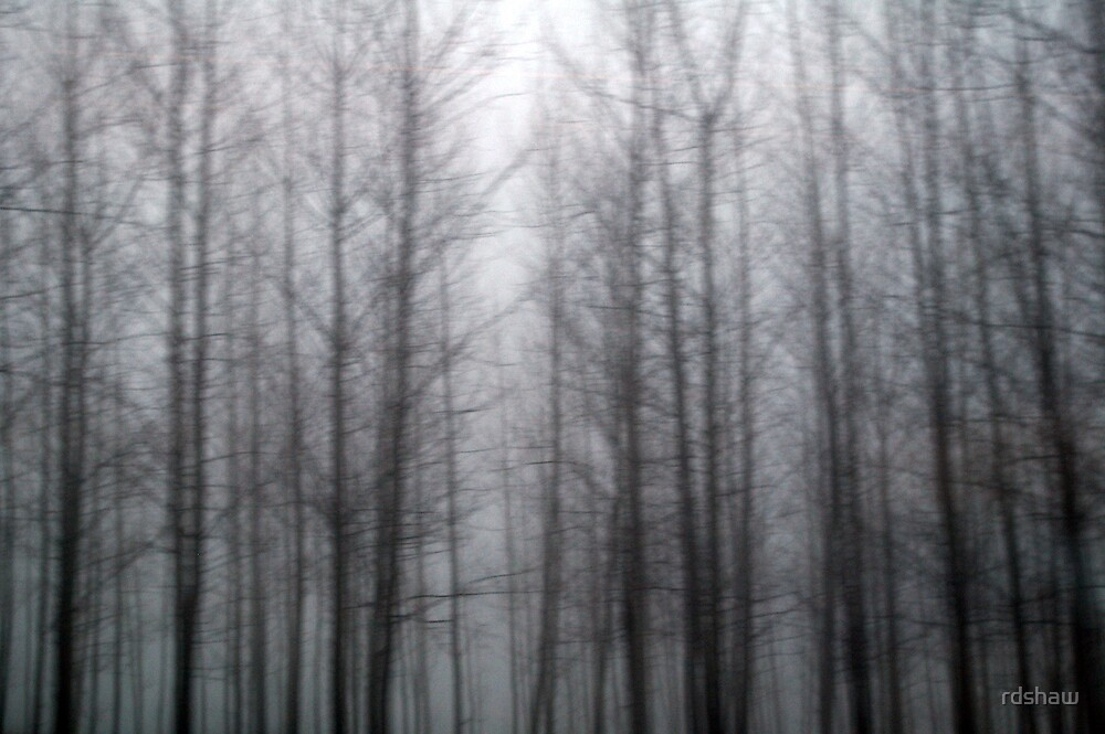 A Dream of Trees by rdshaw