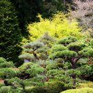 Japanese Gardens  #1 by aussiedi