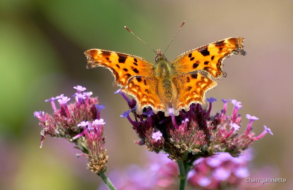 Comma butterfly by cherryannette