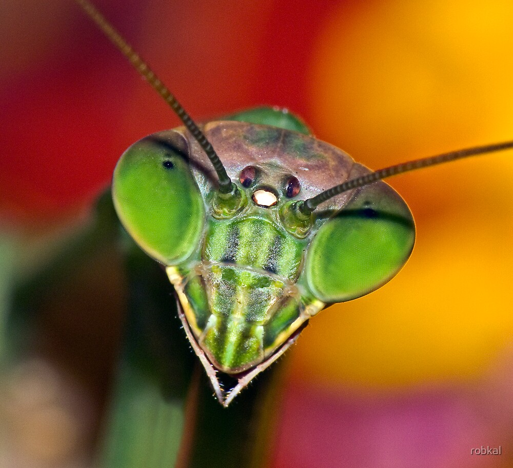 Psychedelic Mantis ! by robkal