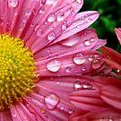 Pink and Yellow by jwawrzyniak
