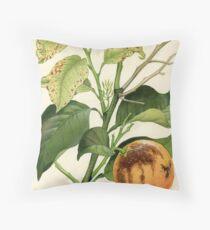 Melanose of Citrus Throw Pillow