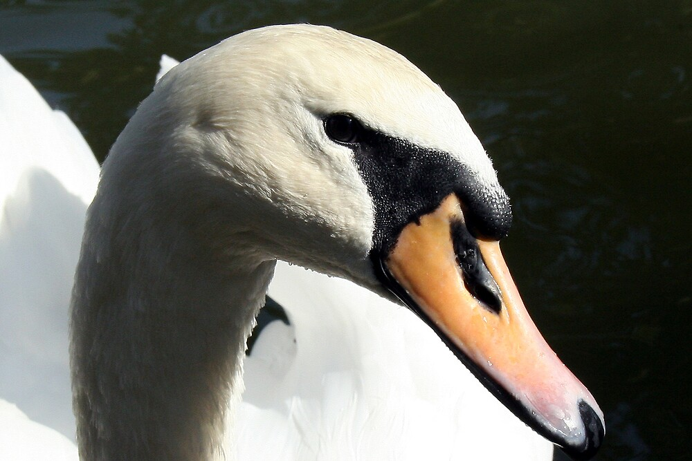 Portrait of a swan by Earl McCall