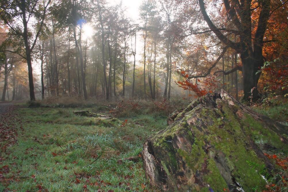 The Forest Floor by Graham Ettridge