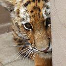 Peek-a-boo! by starbucksgirl26