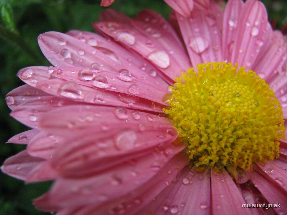 Pink by mwawrzyniak