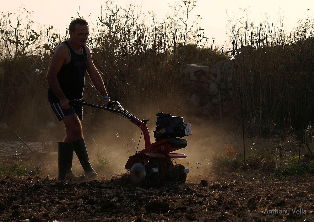 Working the Land by Anthony Vella
