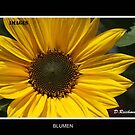 Blumen by Dania  Halle