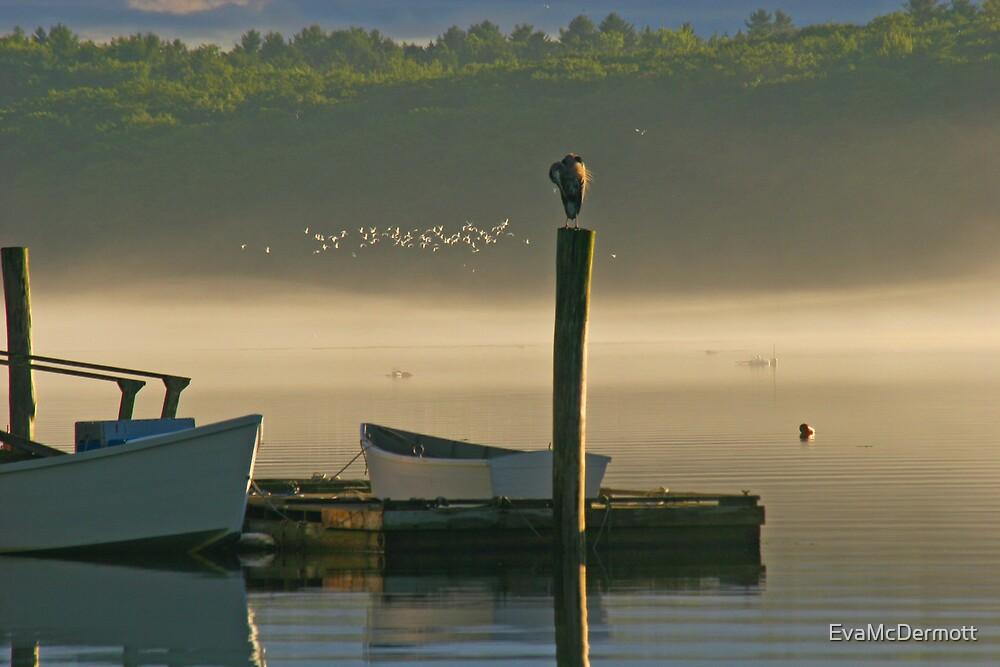 Great Blue Heron in a Fog by EvaMcDermott