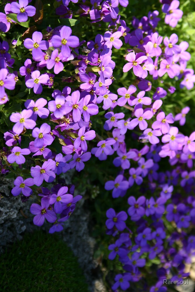 Purple Flowers by Raresoul