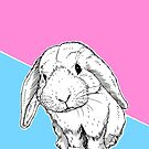 Cute Bunny Rabbit by Adam Regester