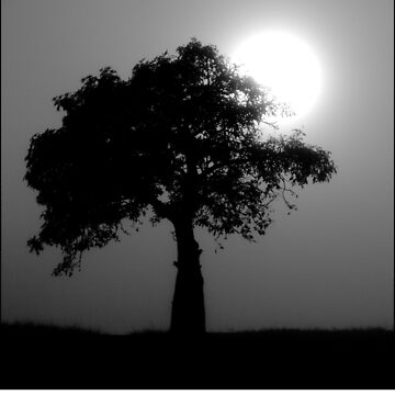 Boab Tree by colhellmuth